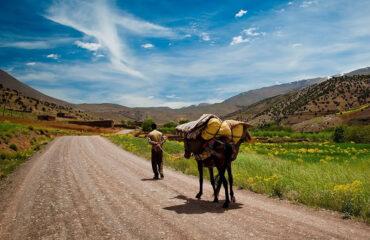 Ait-Bouguemez – Maultiere tragen unser Gepäck