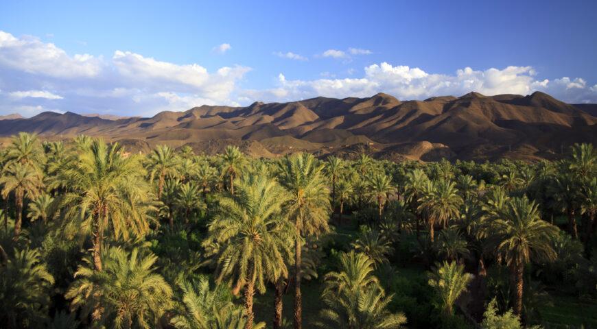 Palmen und Gebirgskette im Draatal