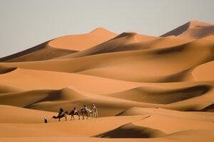 grosse Dünen im Erg Chebbi mit Kamelkarawane aus 4 Tieren, geführt von einem Kameltreiber