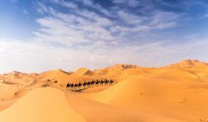 Eine Kamelkarawane mit 11 Reisegaesten zieht mit einem Kamelführer durch die goldgelben Dünen des Erg Chebbi. Der Himmel ist dunkelblau mit Fetzen von Schönwetterwolken.