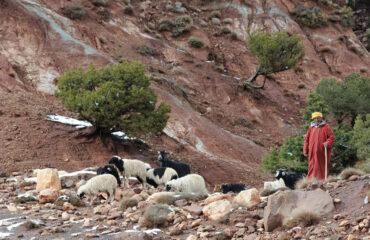 Viehhirte im Hohen Atlas