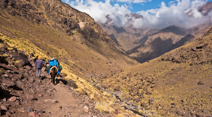 Toubkal-Trekking-Maultiere
